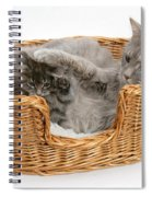 Mother Cat With Kitten Spiral Notebook