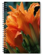 Orange Daylily Spiral Notebook