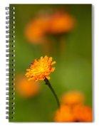 Orange Hawkweed Spiral Notebook