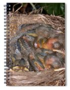 Robin Nestlings Spiral Notebook