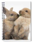Sandy Rabbits Sharing Grass Spiral Notebook