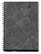 Shark Skin, Sem Spiral Notebook