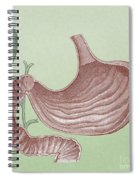 Stomach And Bile Duct Spiral Notebook