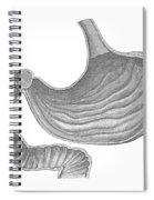 Stomach Spiral Notebook