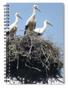 3 Storks In The Nest. Lithuania Spiral Notebook