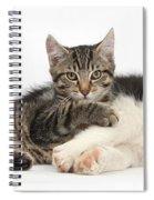 Tabby Kitten & Border Collie Spiral Notebook