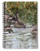 Teal Ducks Spiral Notebook