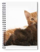 Toy Poodle Puppy With Kitten Spiral Notebook