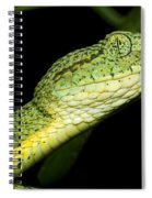 Two Striped Forest Pit Viper Spiral Notebook