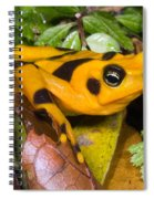 Harlequin Toad Spiral Notebook