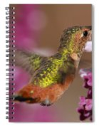 Allens Hummingbird Spiral Notebook