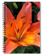 Asiatic Lily Named Gran Paradiso Spiral Notebook