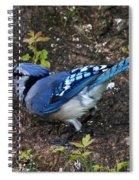 Blue-jay Spiral Notebook