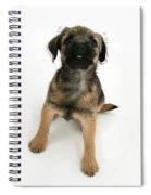 Border Terrier Puppy Spiral Notebook