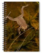 Common Frog Spiral Notebook