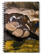 Crowned Tree Frog Spiral Notebook