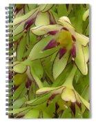 Eucomis Named Bicolor Spiral Notebook