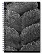 Gecko Foot Pads Spiral Notebook