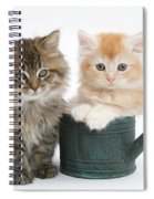Maine Coon Kittens Spiral Notebook