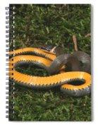 Northern Ringneck Snake Spiral Notebook