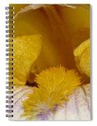 Tall Bearded Iris Named Butterfingers Spiral Notebook