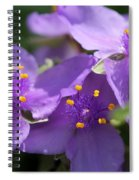 Tradescantia Named Andersonia Mauve Spiral Notebook