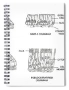 Types Of Epithelial Cells Spiral Notebook