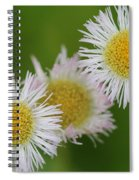 Wildflower Named Robin's Plantain Spiral Notebook