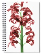 X-ray Of Hyacinth Spiral Notebook