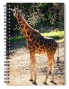 Baringo Giraffe  Spiral Notebook