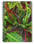 5- Croton Spiral Notebook