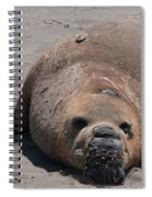 Elephant Seal Colony On Big Sur  Spiral Notebook