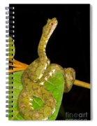 Eyelash Viper Spiral Notebook