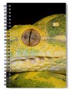 Green Tree Python Spiral Notebook
