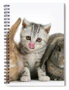 Kitten And Rabbits Spiral Notebook