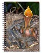 Robin Nestlings Spiral Notebook