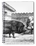 Swine, 19th Century Spiral Notebook