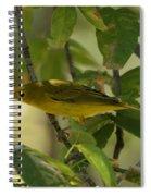 Wilson's Warbler Spiral Notebook