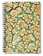 Methicillin-resistant Staphylococcus Spiral Notebook