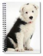 Border Collie Puppy Spiral Notebook