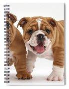Bulldog Puppies Spiral Notebook