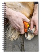 Dog Grooming Spiral Notebook