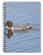 Green Wing Teal Spiral Notebook