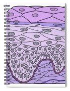 Illustration Of Stratified Squamous Spiral Notebook