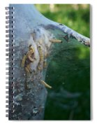 Bird-cherry Ermine Caterpillars Spiral Notebook