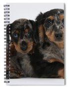 Dachshund Pups Spiral Notebook