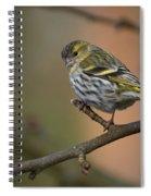 Eurasian Siskin Spiral Notebook