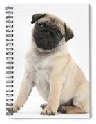 Fawn Pug Pup Spiral Notebook