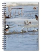 Hooded Merganser Spiral Notebook