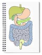 Illustration Of Abdomen Spiral Notebook